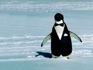 real penquin